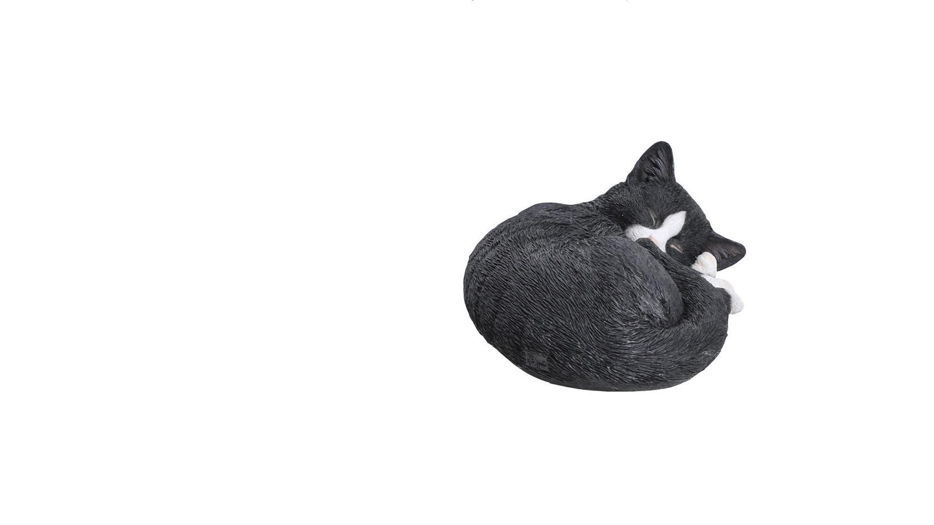 Sleeping Black Cat - Big Brother 2017