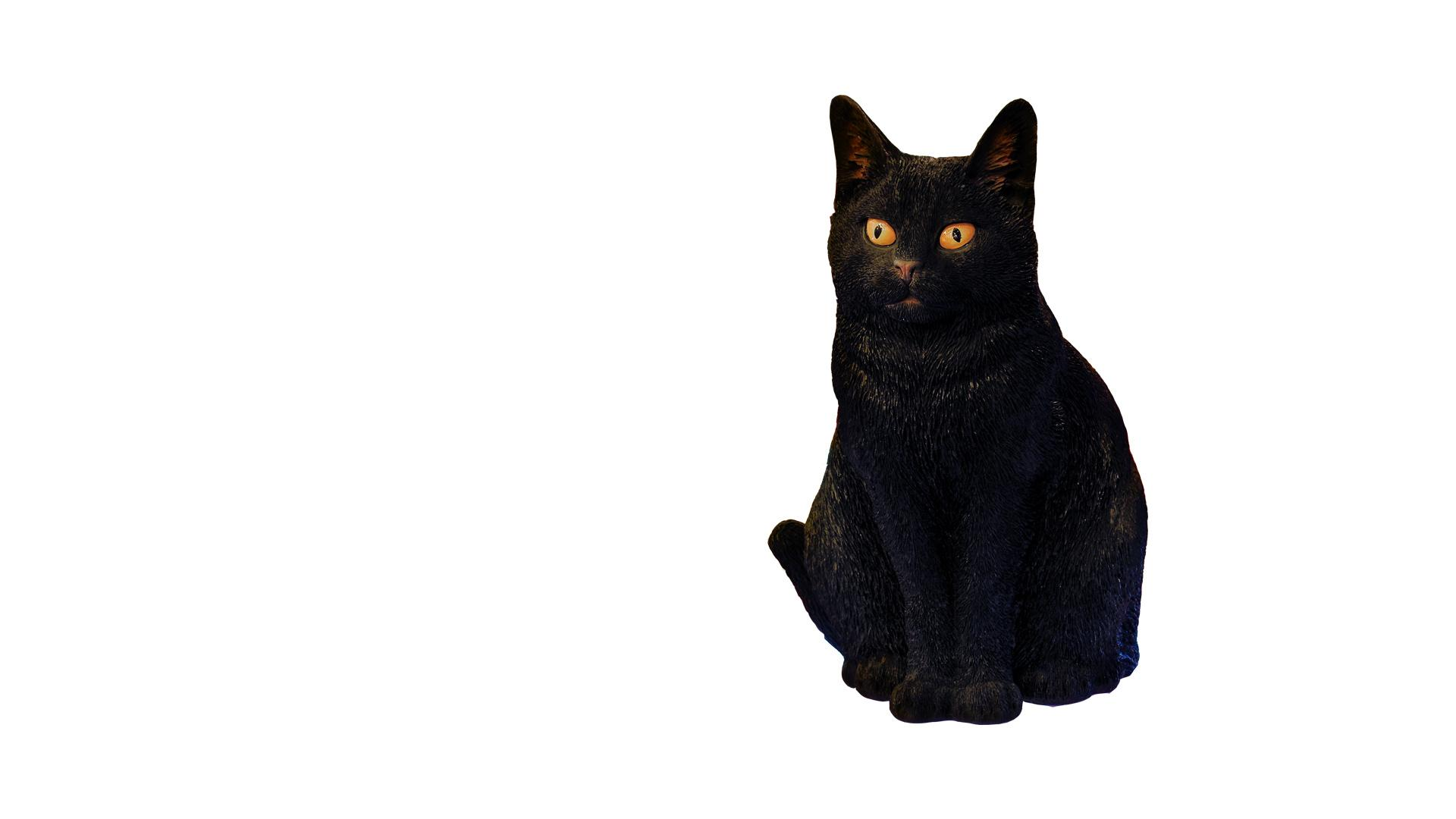 Black Cat Ornament - Big Brother 2017
