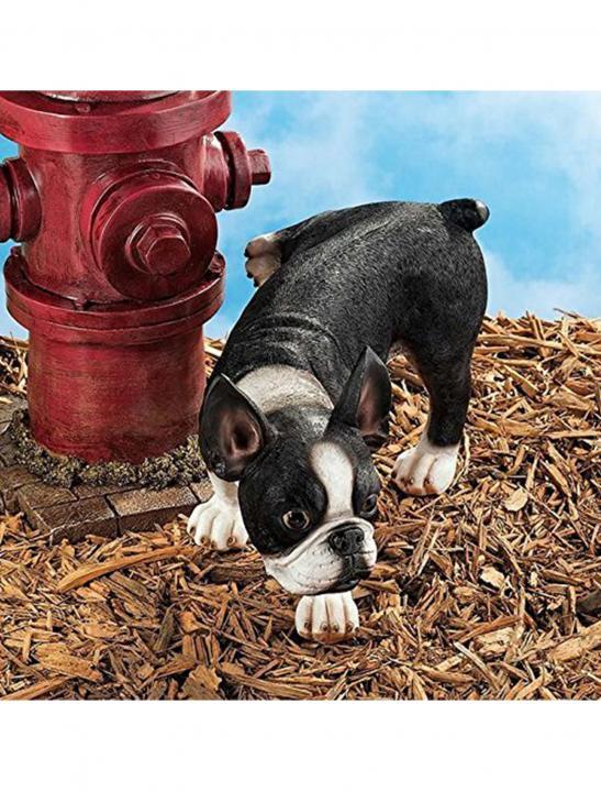 Naughty Boston Terrier Dog - Big Brother 2017