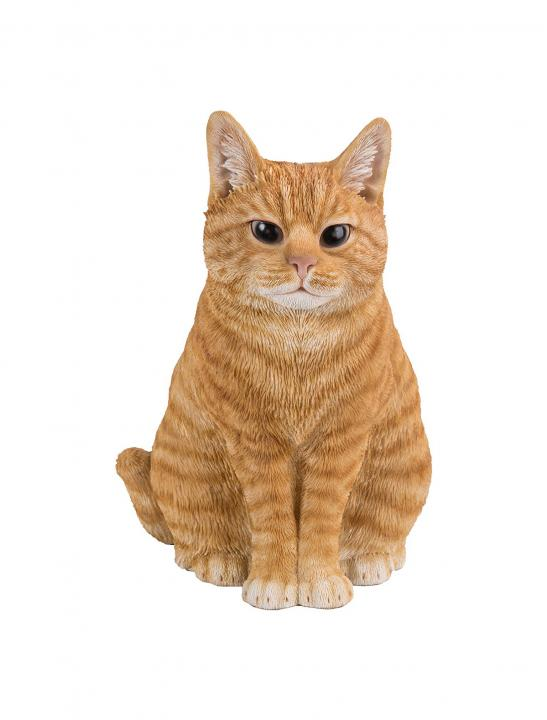 Sitting Ginger Cat - Big Brother 2017